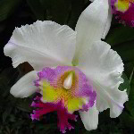 American Orchid Society - Delray Beach, FL