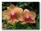 American Orchid Society - Delray Beach, FL