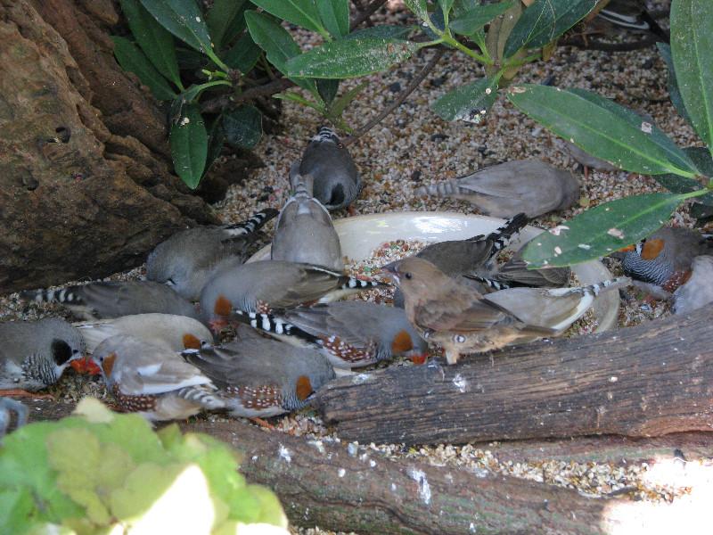 butterfly rainforest flmnh uf gainesville fl 061 - Uf Butterfly Garden