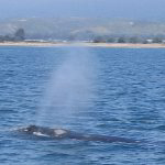 Santa Barbara Whale Watching Tour Pictures