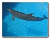 Interactive Aquarium - La Isla Shopping Mall - Cancun Mexico