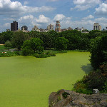 Central Park - New York City, NY