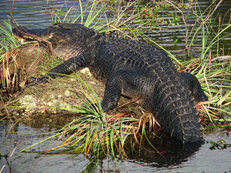 Everglades National Park. Everglades-National-Park-
