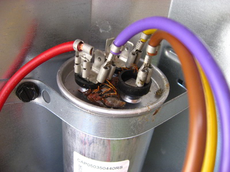wiring diagram for goodman condenser with Goodman Hvac Condenser Dual Run Capacitor Replacement Guide 016 on Watch likewise Goodman Heat Pump Low Voltage Wiring Diagram additionally B1370735 Goodman Time Delay Fan Control Board B1370735 Goodman besides 524743 Ac Not Working Only Works Contactor Pushed as well How To Replace A Ceiling Fan Motor Capacitor.