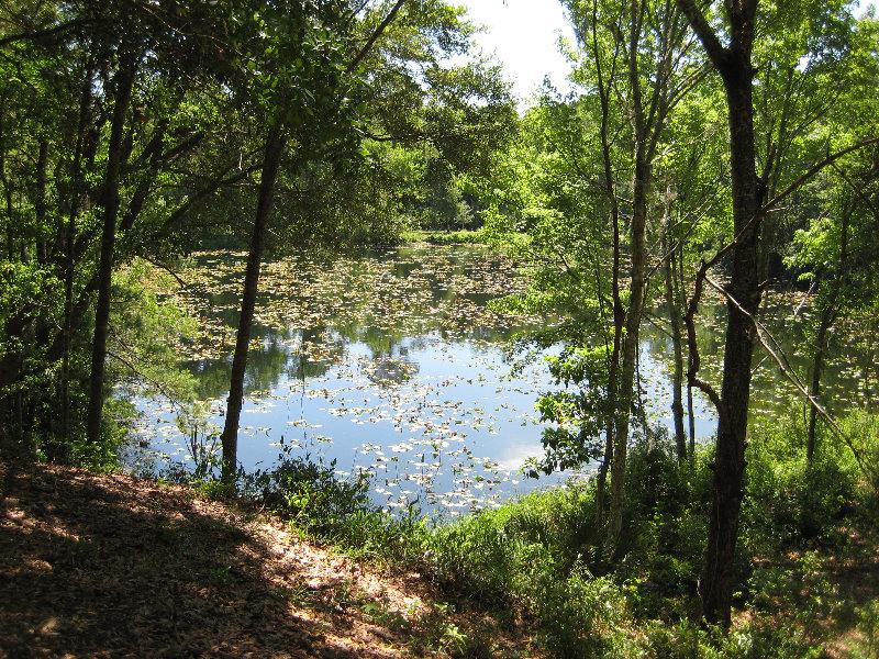 Jacksonville arboretum and gardens jacksonville fl 011 - Jacksonville arboretum and gardens ...