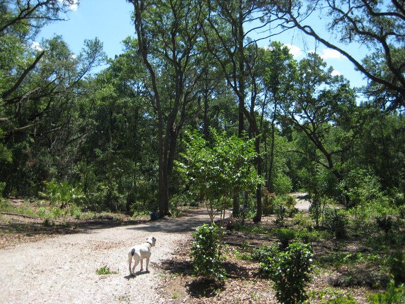 Jacksonville Arboretum And Gardens Jacksonville Fl 013