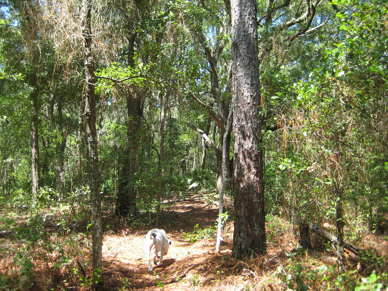 Jacksonville Arboretum And Gardens Jacksonville Fl 016