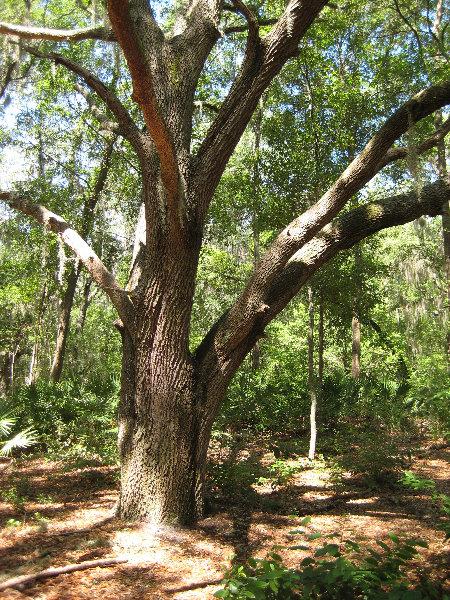 Jacksonville arboretum and gardens jacksonville fl 017 - Jacksonville arboretum and gardens ...