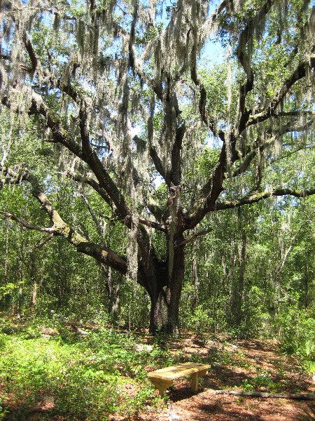 Jacksonville arboretum and gardens jacksonville fl 018 - Jacksonville arboretum and gardens ...