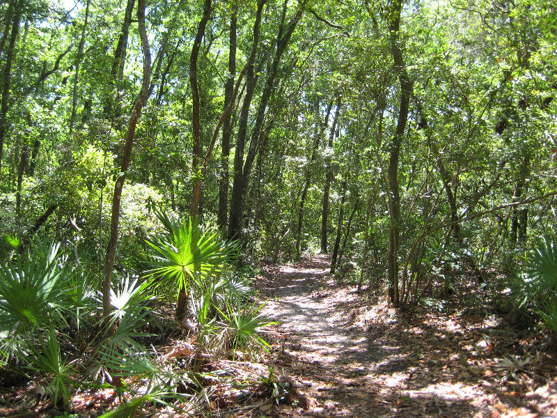 Jacksonville Arboretum And Gardens Jacksonville Fl 021