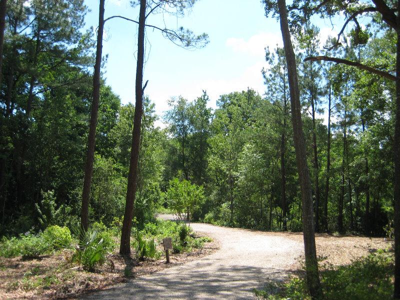 Jacksonville Arboretum And Gardens Jacksonville Fl 024