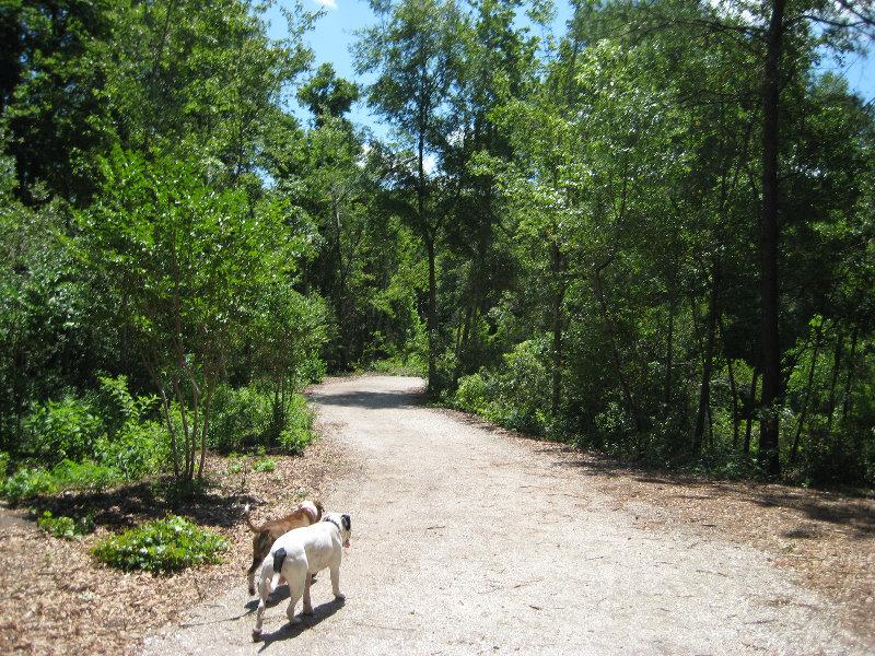 Jacksonville Arboretum And Gardens Jacksonville Fl 025