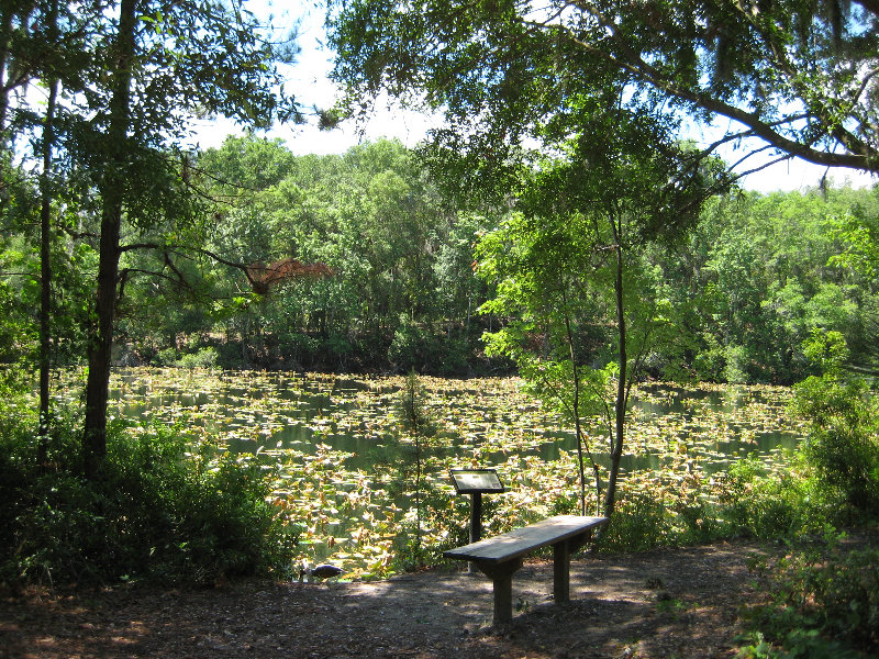 Jacksonville Arboretum And Gardens Jacksonville Fl 026