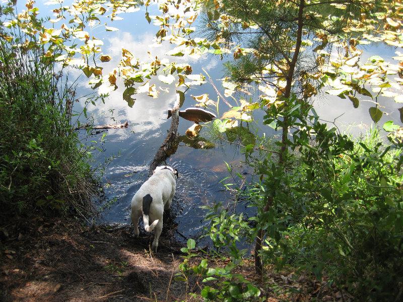 Jacksonville arboretum and gardens jacksonville fl 028 - Jacksonville arboretum and gardens ...