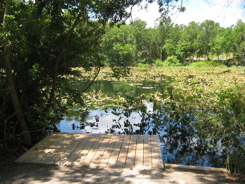 Jacksonville Arboretum And Gardens Jacksonville Fl 030