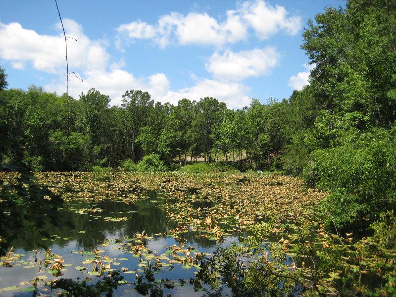 Jacksonville Arboretum And Gardens Jacksonville Fl 031