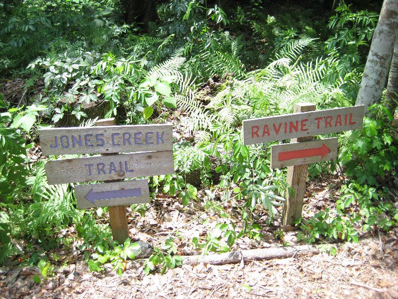Jacksonville Arboretum And Gardens Jacksonville Fl 032