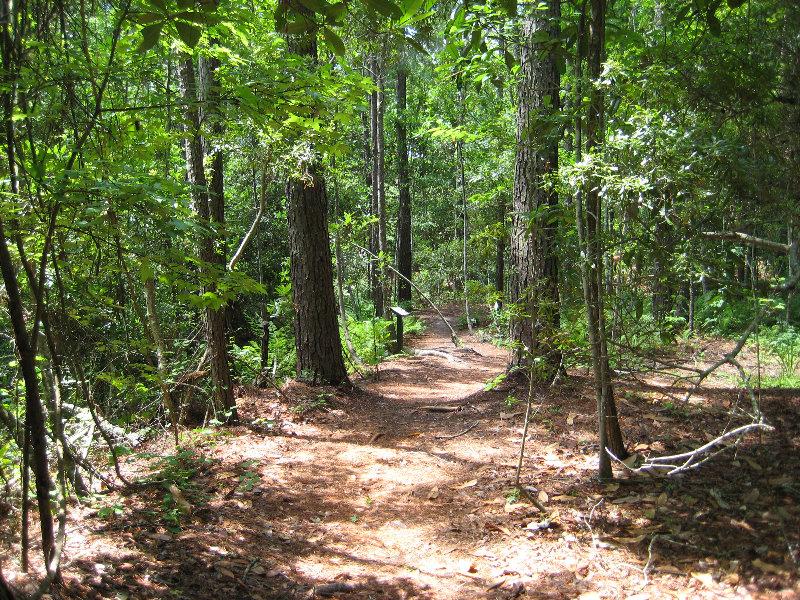 Jacksonville Arboretum And Gardens Jacksonville Fl 036