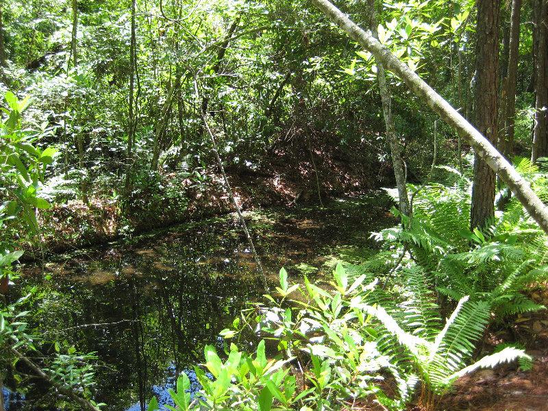 Jacksonville arboretum and gardens jacksonville fl 038 - Jacksonville arboretum and gardens ...
