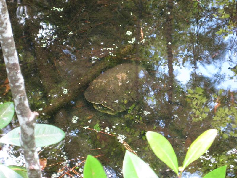 Jacksonville Arboretum And Gardens Jacksonville Fl 039