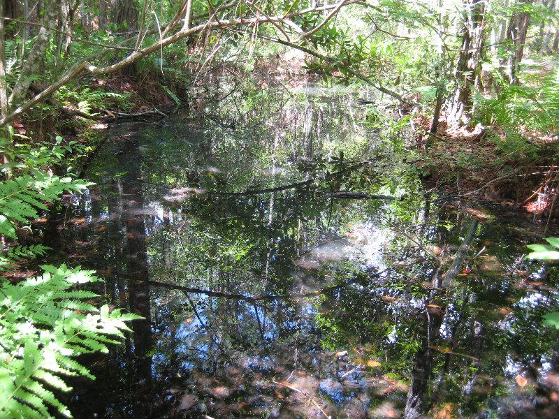 Jacksonville Arboretum And Gardens Jacksonville Fl 041