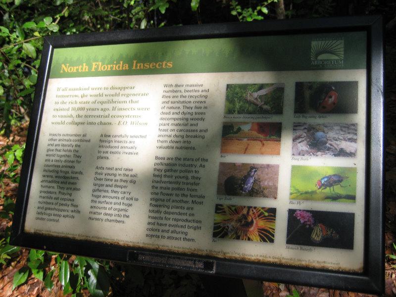 Jacksonville Arboretum And Gardens Jacksonville Fl 042