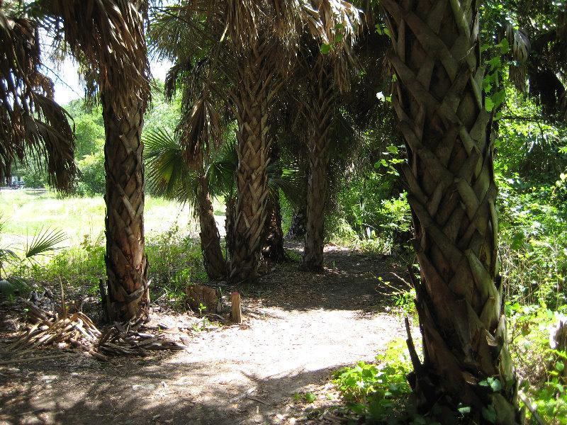 Jacksonville Arboretum And Gardens Jacksonville Fl 044