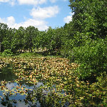 Paul 39 s travel pictures a collection of digital images - Jacksonville arboretum and gardens ...
