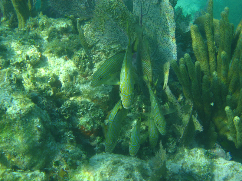 John pennekamp coral reef state park boundaries in dating 4