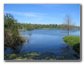 Lake alice pictures university of florida gainesville for Fishing in gainesville fl
