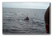 Maine Whale Watching Boat Tour Photo Album