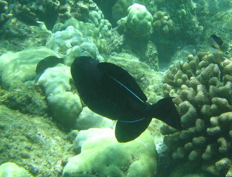 Snorkeling Big Island Hawaii