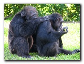 Miami Metro Zoo Pictures & Video