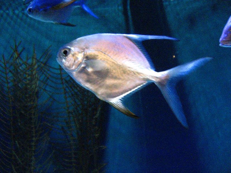 Mote Marine Aquarium Sarasota Fl 007