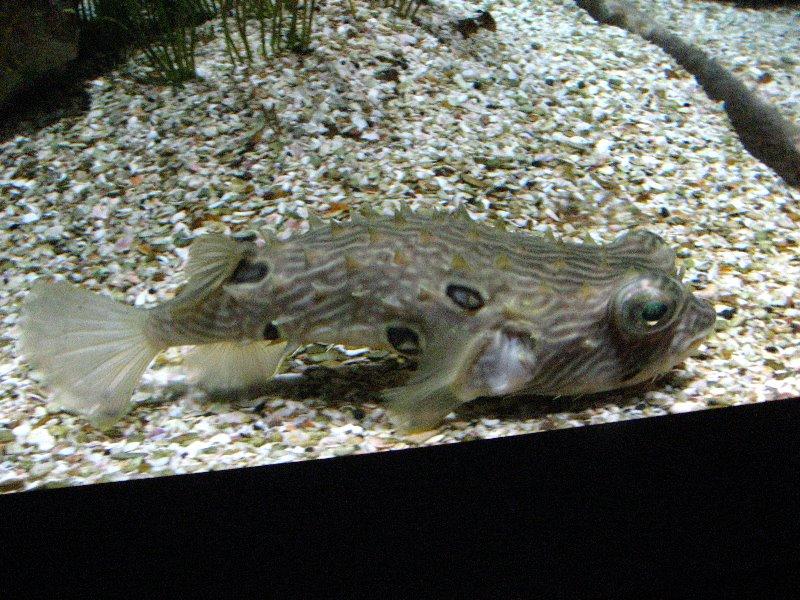 Mote Marine Laboratory Aquarium In Sarasota Florida