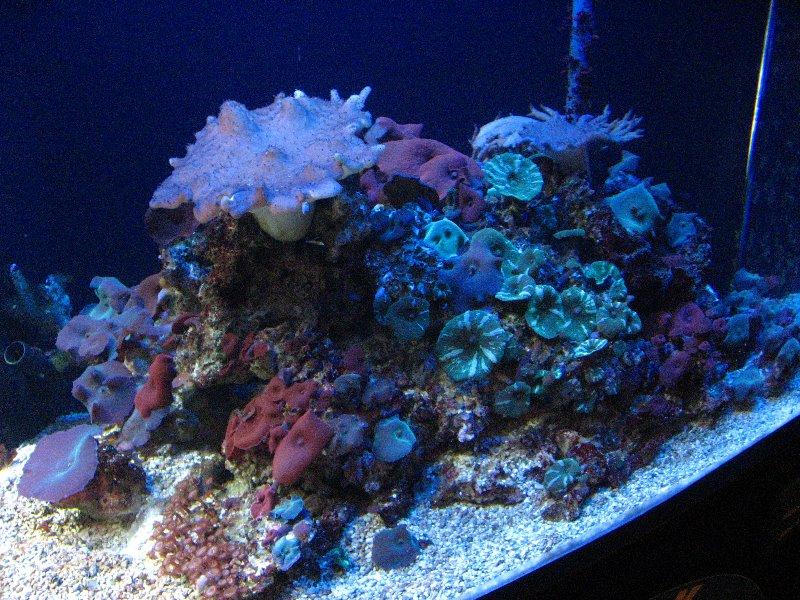 Florida Marine Aquarium Funny Images Gallery