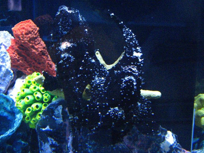 Mote Marine Aquarium Sarasota Fl 014