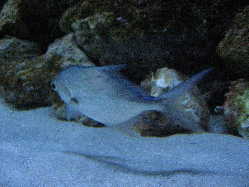 Mote Marine Aquarium Sarasota Fl 019