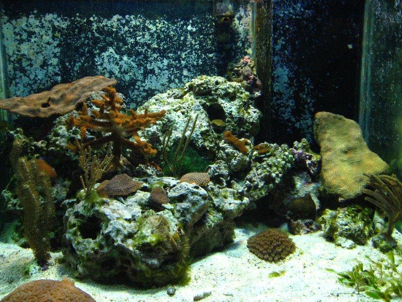 Mote Marine Aquarium Sarasota Fl 023