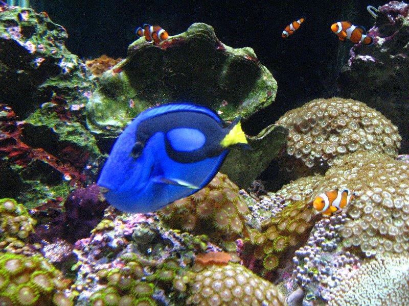 The Florida Aquarium Promo Code