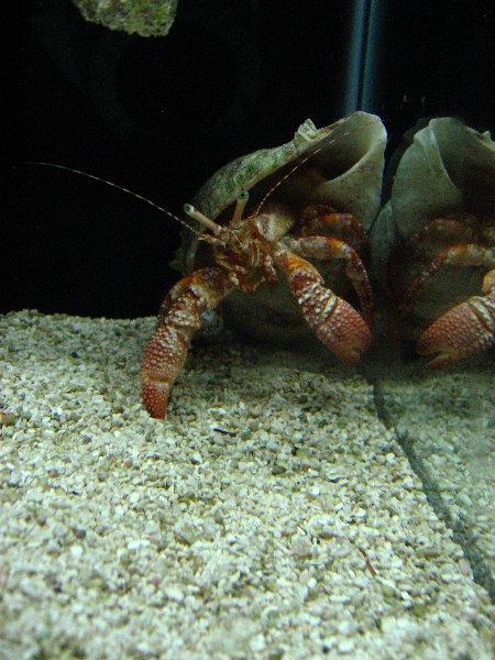 Mote Marine Aquarium Sarasota Fl 033