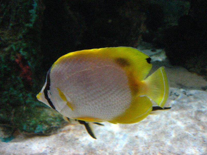 Mote Marine Laboratory And Aquarium Mega Deals And Coupons