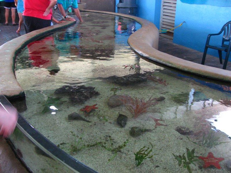 Hotels Near Mote Aquarium