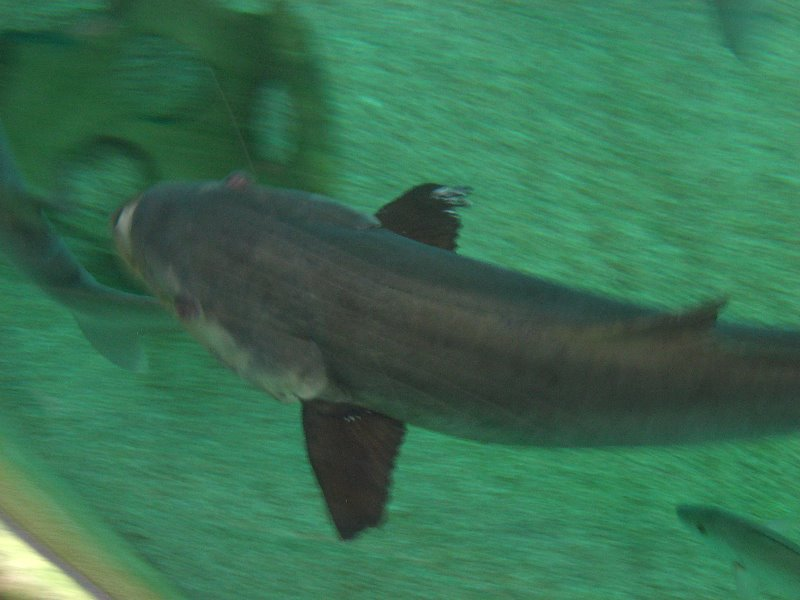 Mote Marine Aquarium Sarasota Fl 063
