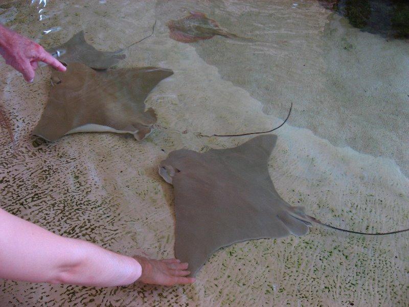 Mote Marine Aquarium Sarasota Fl 069