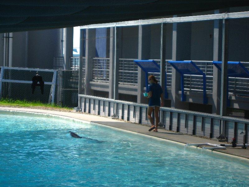 Mote Marine Aquarium Sarasota Fl 083