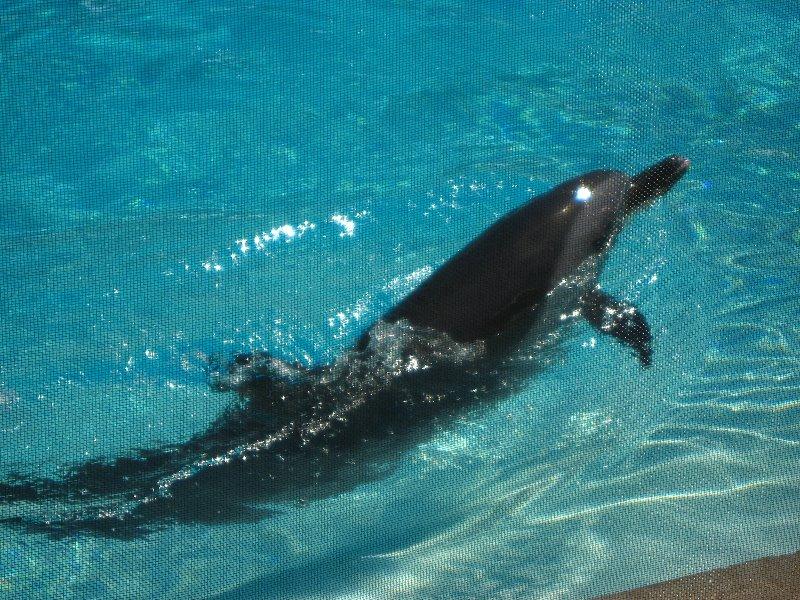Mote Marine Aquarium Sarasota Fl 085