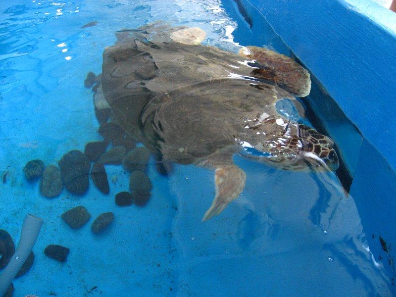 Mote Marine Aquarium Sarasota Fl 086