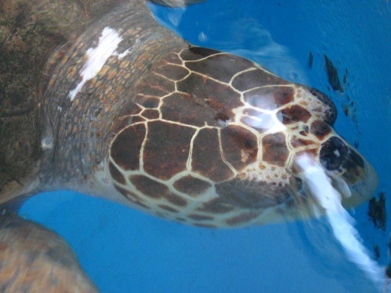 Mote Marine Aquarium Sarasota Fl 087