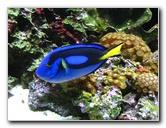 Mote Marine Aquarium Pictures & Video - Sarasota, FL